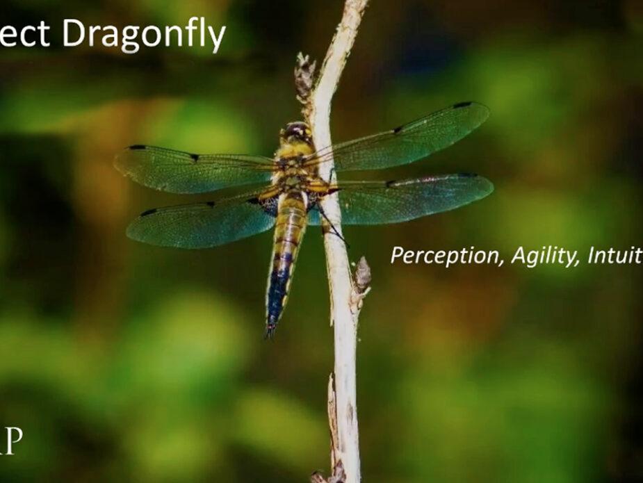IMAP_dragonfly